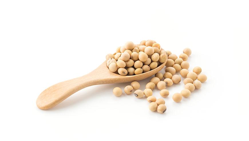 Alimentos alternativos à proteína animal